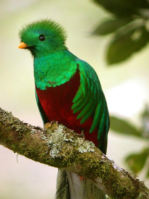 Quetzal bird | Entre trois volcans