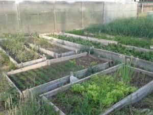 Anna's Vegetable Garden