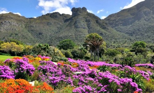 Cape-Town-Kirstenbosch-Flower-Display